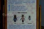 2019_10_01-100-rokov-včelárstva-na-Slovensku-001a