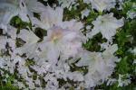 2021_05_19-BL-Botanicka-zahrada-001