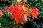 2021_05_19-BL-Botanicka-zahrada-003