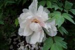 2021_05_19-BL-Botanicka-zahrada-005