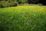 2021_05_19-BL-Botanicka-zahrada-015