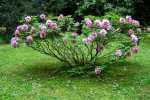 2021_05_19-BL-Botanicka-zahrada-016