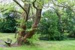 2021_05_19-BL-Botanicka-zahrada-018