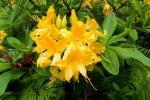 2021_05_19-BL-Botanicka-zahrada-022