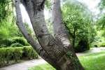 2021_05_19-BL-Botanicka-zahrada-028