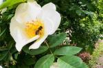 2021_05_19-BL-Botanicka-zahrada-032