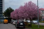2021_04_19-Dca-Ulice-Dubnice-001