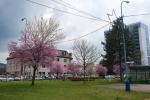 2021_04_19-Dca-Ulice-Dubnice-012