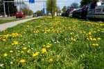 2021_05_04-Dubnica-nad-Vahom-042
