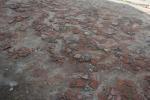 2021_08_07-PL-Koncentracny-tabor-Auschwitz-I-096
