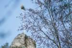 2021_05_01-Stavanie-maja-v-Cerveny-Kamen-004