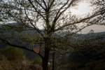 2021_05_01-Stavanie-maja-v-Cerveny-Kamen-039