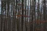 2020_01_06-Trojkráľový-výstup-na-Markovicu-015