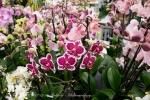 2017_03_11 Medzinárodná výstava orchideí 002