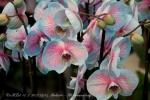 2017_03_11 Medzinárodná výstava orchideí 007