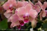 2017_03_11 Medzinárodná výstava orchideí 008