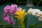 2017_03_11 Medzinárodná výstava orchideí 009