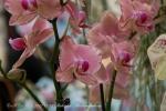 2017_03_11 Medzinárodná výstava orchideí 010