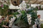2017_03_11 Medzinárodná výstava orchideí 011