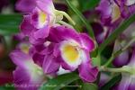 2017_03_11 Medzinárodná výstava orchideí 012