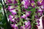 2017_03_11 Medzinárodná výstava orchideí 013