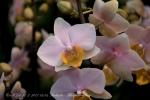 2017_03_11 Medzinárodná výstava orchideí 021