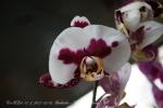 2017_03_11 Medzinárodná výstava orchideí 024