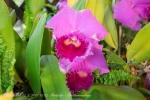 2017_03_11 Medzinárodná výstava orchideí 040