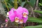 2017_03_11 Medzinárodná výstava orchideí 049