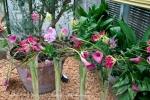2017_03_11 Medzinárodná výstava orchideí 054