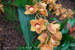 2017_03_11 Medzinárodná výstava orchideí 059