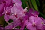 2017_03_11 Medzinárodná výstava orchideí 071