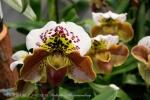 2017_03_11 Medzinárodná výstava orchideí 077