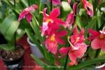 2017_03_11 Medzinárodná výstava orchideí 078