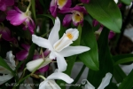 2017_03_11 Medzinárodná výstava orchideí 082