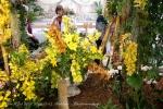 2017_03_11 Medzinárodná výstava orchideí 094