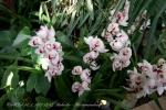 2017_03_11 Medzinárodná výstava orchideí 103
