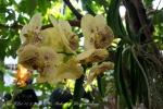 2017_03_11 Medzinárodná výstava orchideí 109