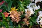 2017_03_11 Medzinárodná výstava orchideí 121