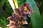 2017_03_11 Medzinárodná výstava orchideí 125