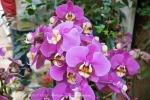 2017_03_11 Medzinárodná výstava orchideí 136