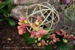 2017_03_11 Medzinárodná výstava orchideí 138