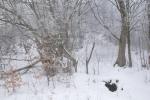 2017_01_29 Vršatské Podhradie - Pruské 069