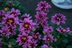 2018_04_14 Záhradkár, včelár, poľovník 081