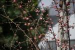 2018_04_14 Záhradkár, včelár, poľovník 116